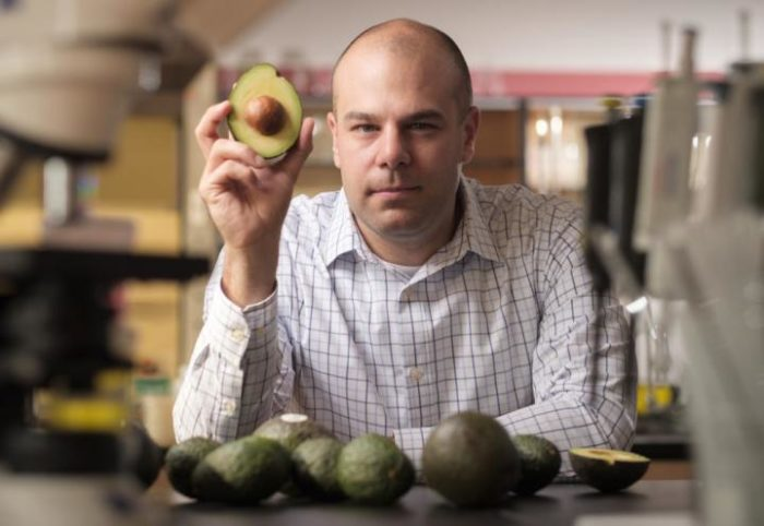 Avocados May Help Manage Obesity And Prevent Diabetes