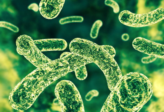 Prebiotics and probiotics offer a one-two punch for keeping cancer at bay