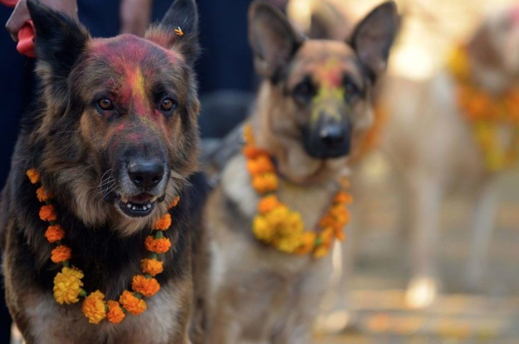 Nepal Has A Yearly Festival To Celebrate The Role Dogs Have In Human Life