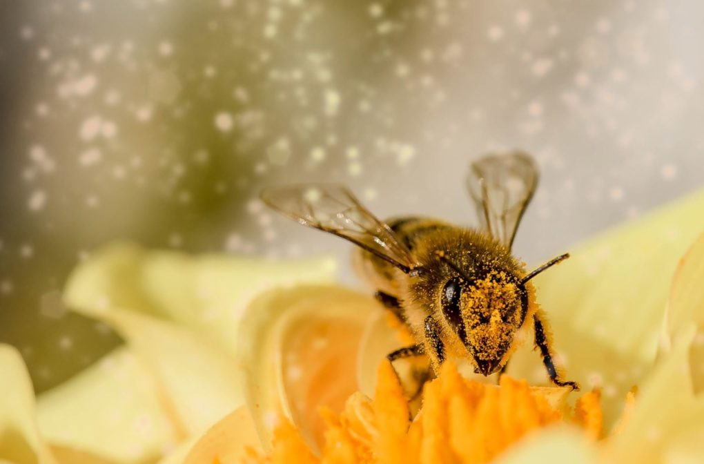 Insecticides Are Becoming MORE Toxic To Honey Bees