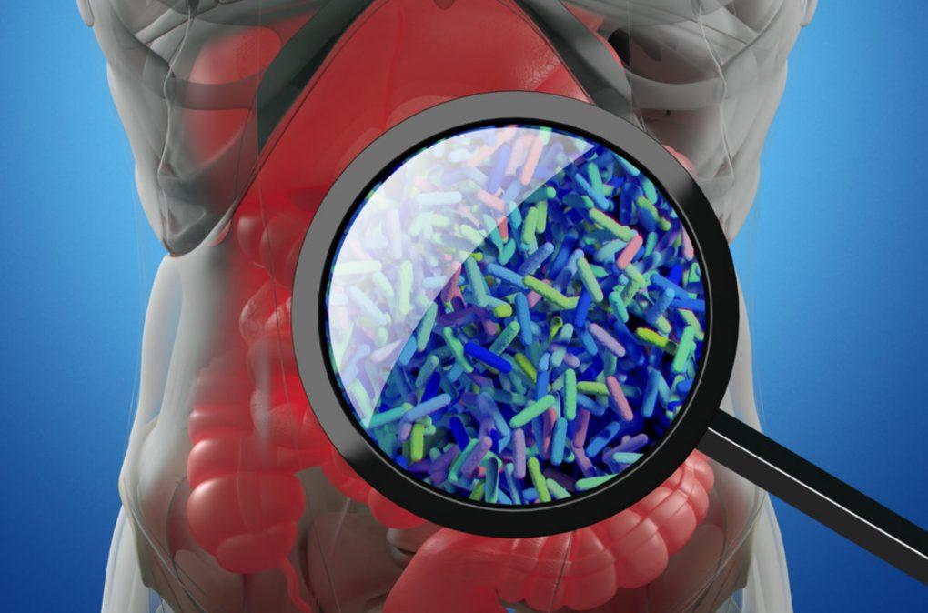 Prebiotics May Help Fight Melanoma By Activating Anti-Tumor Immunity