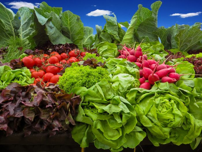 Complete List Of How Many Plants Needed To Grow A Year's Supply Of Food