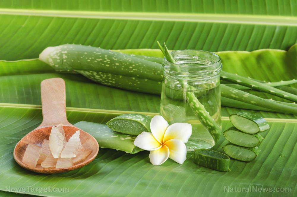 5 Benefits that make aloe vera fantastic for skin health