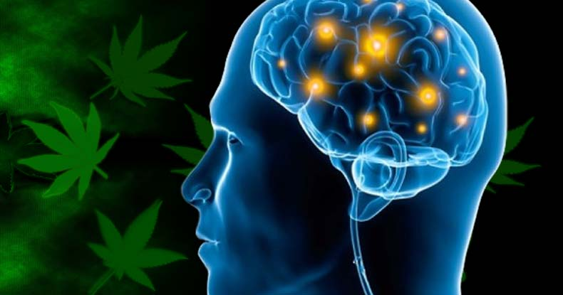 Study Shows Cannabis Temporarily Relieves PTSD Symptoms