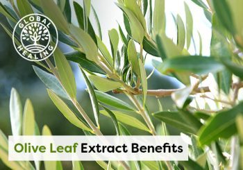 Olive Leaf Extract Benefits: Brain, Heart, Immune System, and More