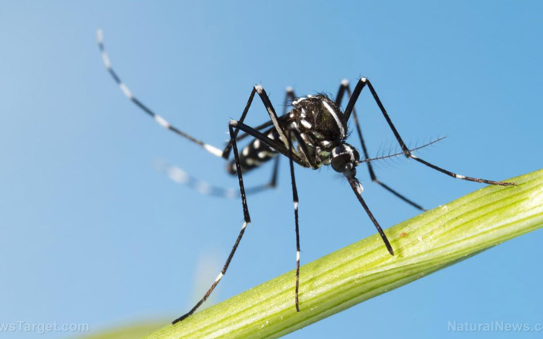 An accident waiting to happen: Tech company to release 750 MILLION GMO mosquitoes in Florida to fight dengue fever