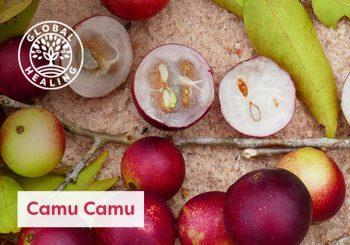 Camu Camu: The Next Great Superfood