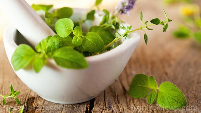 Natural disease prevention: 4 Herbal remedies for UTIs