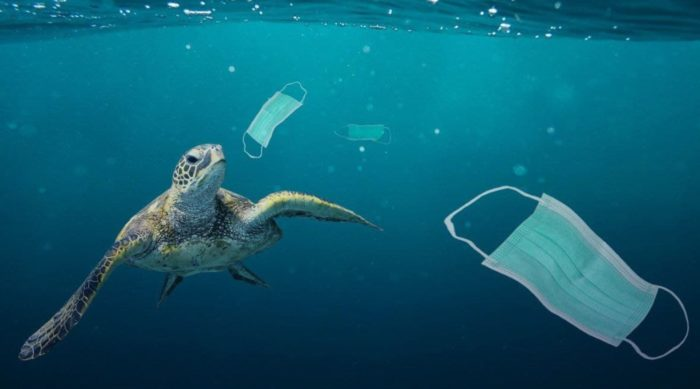 Over 1.5 BILLION Face Masks Now Believed To Be Polluting Oceans Thanks To 2020
