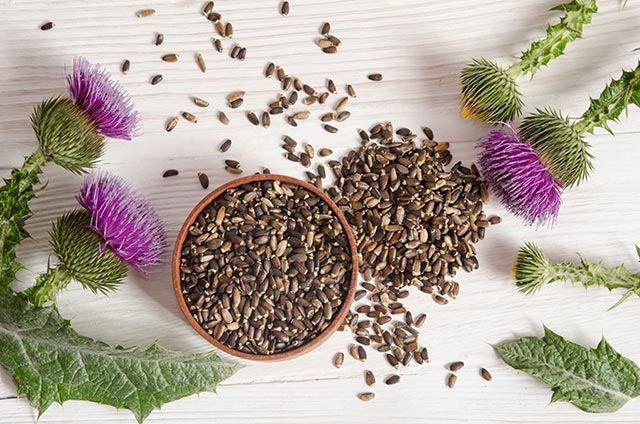 Healing plants: Silymarin from milk thistle found to have anti-cancer properties