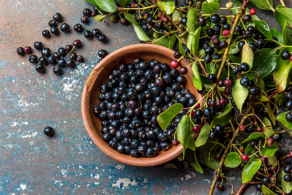 Researchers study preventing cancer and diabetes with the Chilean maqui berry
