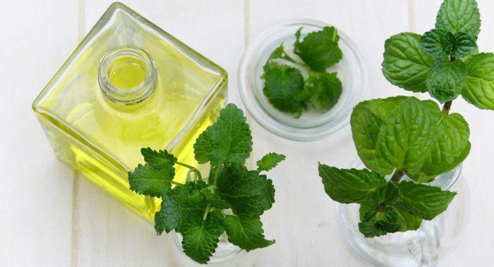 Magical Mint: 20 Top Health Benefits