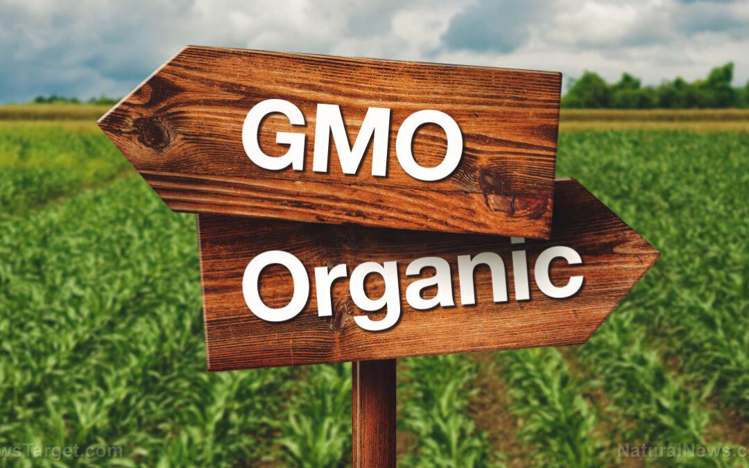 GMOs are harmful, should be avoided at all costs – study