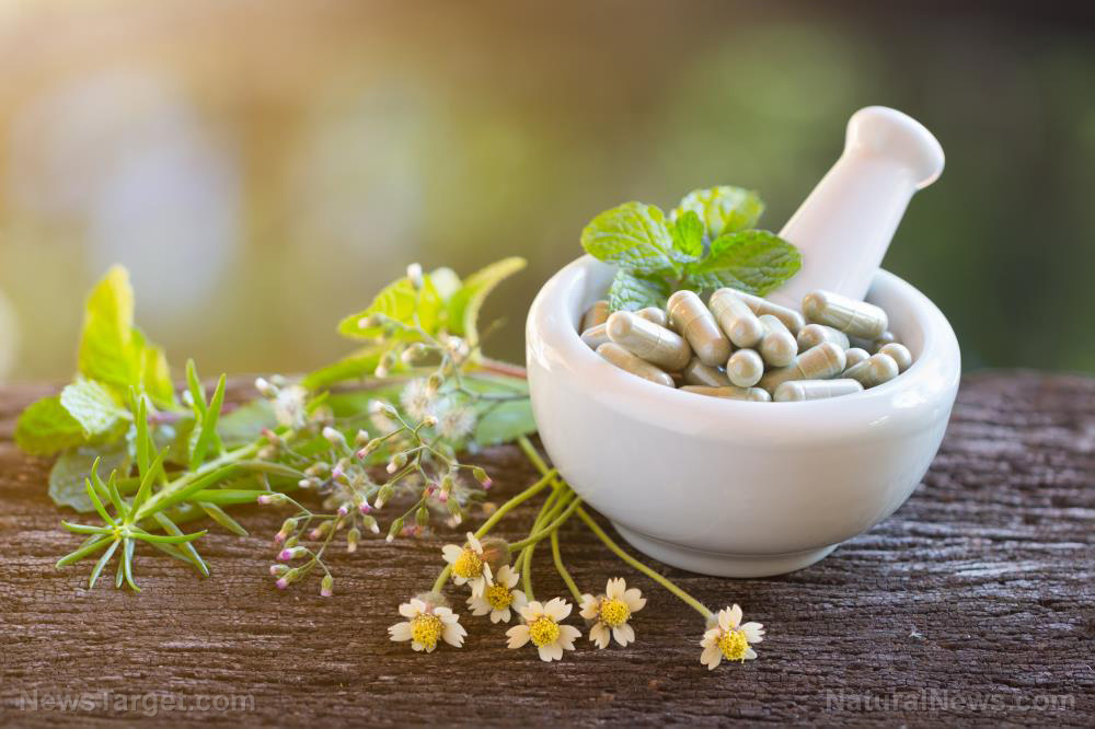 Thai government approves green chiretta herb as treatment for covid