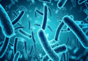 Bacteria is Best: Why a Healthy Gut Microbiome is Key to Cancer Prevention