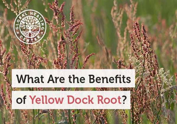 What Are the Benefits of Yellow Dock Root?