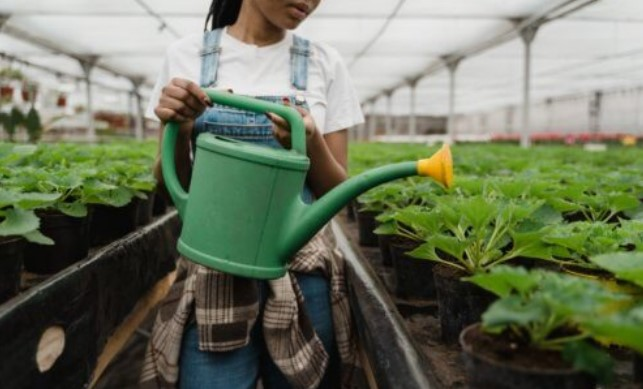 Vaccines In Your Salad? Scientists Growing Medicine-Filled Plants To Replace Injections
